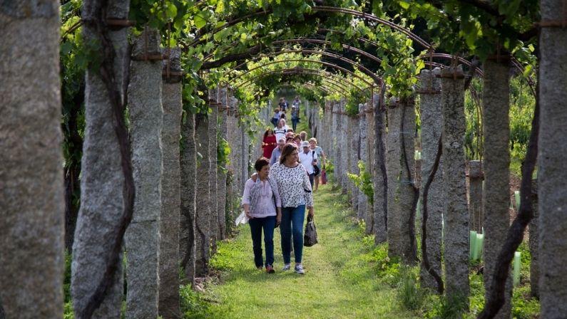 X Jornadas De Puertas Abiertas En Las Rutas Del Vino De Galicia